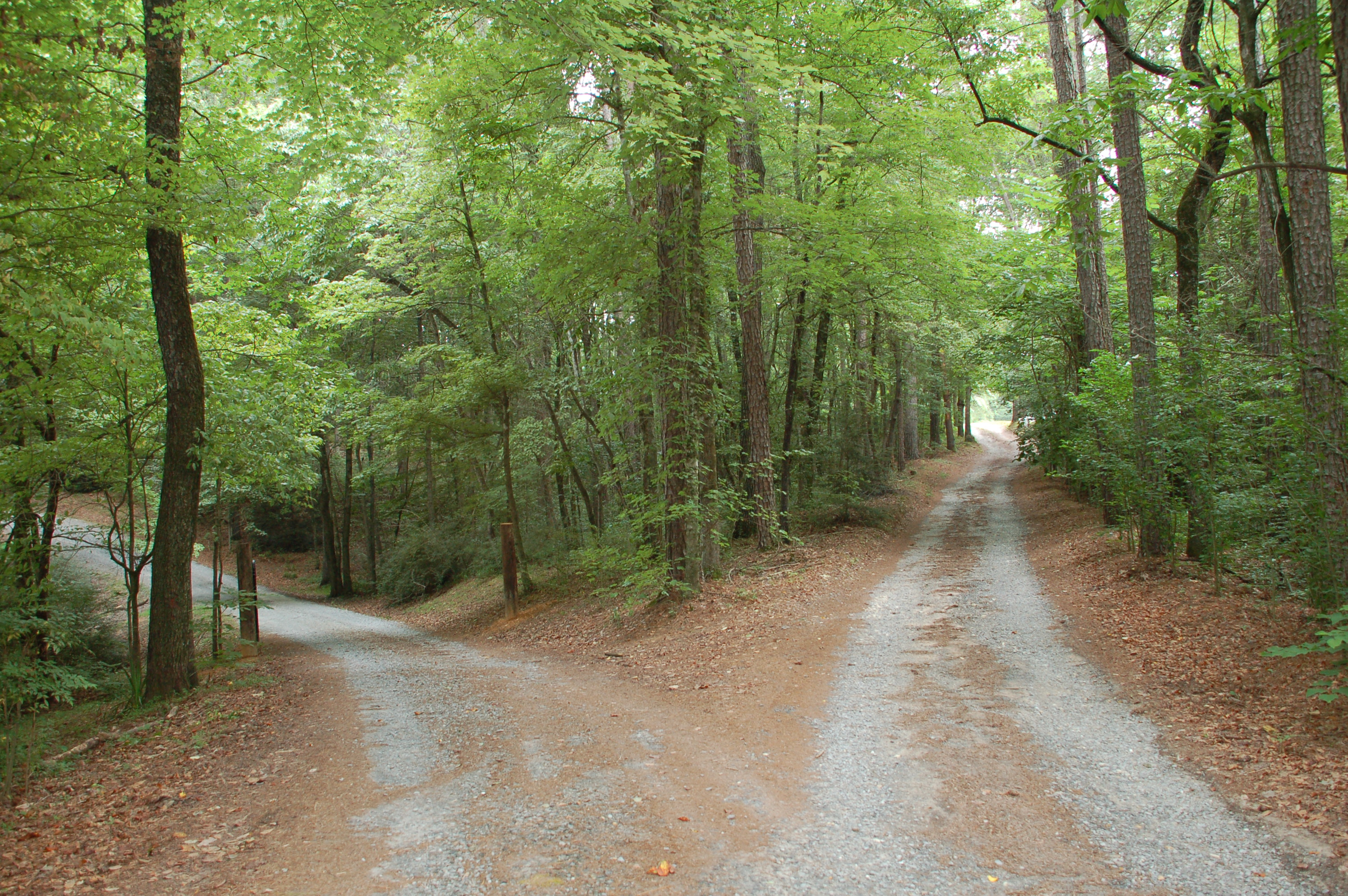 2-roads-in-woods